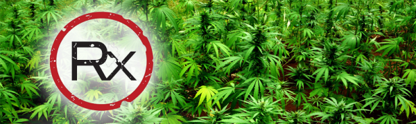 how legalizing marijuana could help boost the economy Marijuana could have a surprising economic impact marijuana's economic impact could more than triple up 42% from the $699 million in legal marijuana sales.