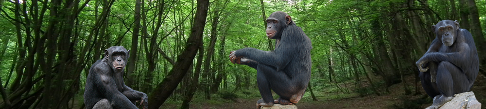 Threats of Demand and Illegal Trade of the Chimpanzee: An Environmental Science Essay