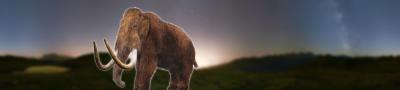 Essay on extinction of animals