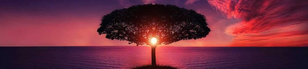 MLA Sample Essay on the Tree of Life