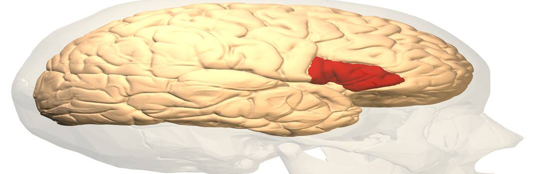 Critical Analysis of Brain Development over the Human Lifecycle - Post banner
