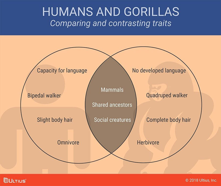 Venn diagram comparing humans and gorillas.